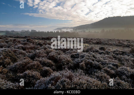A view across frosty heather on Spaunton Moor towards a mist-filled Rosedale in the North York Moors National Park. - Stock Image
