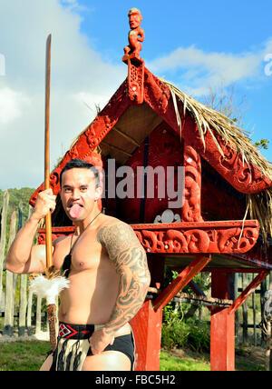 A Maori warrior troupe member at Te Puia .performs a war haka with a spear at  Rotorua s New Zealand's Maori - Stock Image