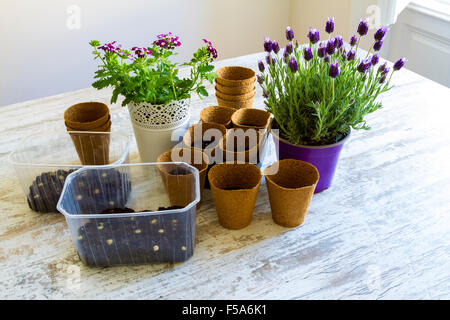 Planting flowers and vegetables at home - Stock Image