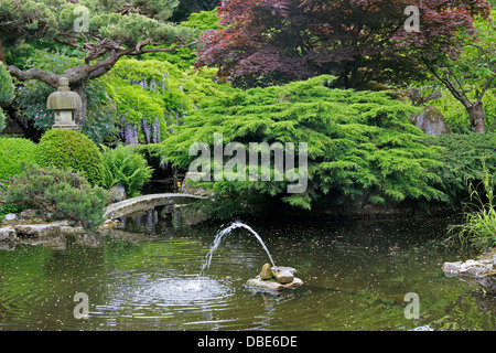 The Japanese Garden, Cottered, Hertfordshire. - Stock Image