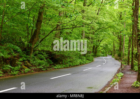 Empty road in Oirase Keiryu Stream in Towada National Park, Japan. The stream walk part of the road is roughly 14km long and features a series of curr - Stock Image