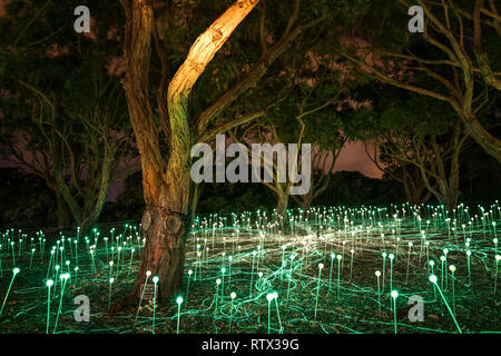 The Field of Light: Avenue of Honour is an immersive art installation by Bruce Munro illuminating the Avenue of Honour at Mount Clarence, Western Aust - Stock Image
