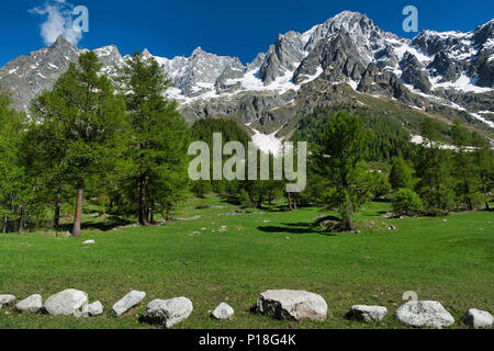 meadow, larches, forest, mountains of Aosta Valley in a beautiful day of spring with blue sky in background - Stock Image