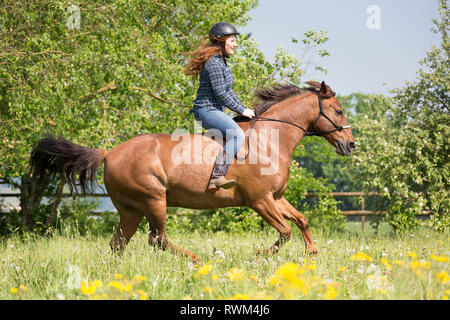 Missouri Fox Trotter. Red-haired young woman on chestnut gelding glloping on a pasture. Switzerland - Stock Image