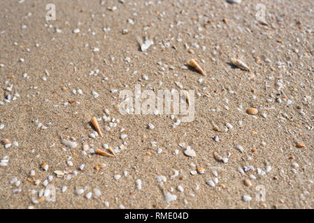 broken shells on a beach sand in bright daylight. concept of holiday and travel - Stock Image