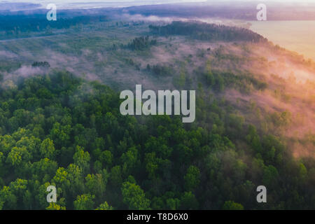Landscape with a view from the height of the pine forest with morning fog - Stock Image