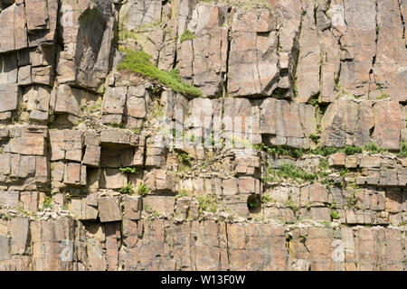 Flora on the rock face of Crowden Great Quarry or Loftend Quarry, Derbyshire, England, UK - Stock Image