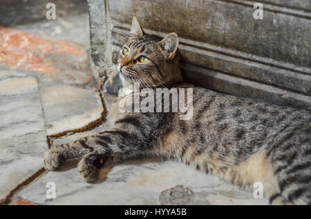 A cat relaxes on a marble floor. - Stock Image