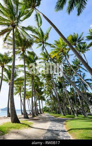 Walking path under bent palmtrees along the beach, Palm Cove, Cairns Northern Beaches, Far North Queensland, QLD, FNQ, Australia - Stock Image