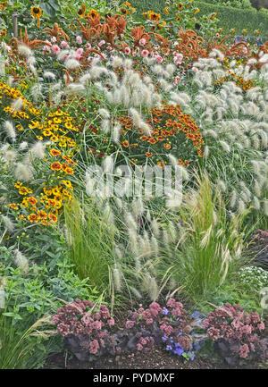 Colourful garden flower border with Heleniums Waldraut and ornamental grass Pennisetum villosum - Stock Image