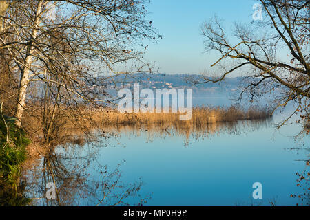 a reed bed on the lake of Varese with a hill in the background - Stock Image