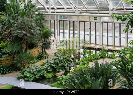 Tropical gardens under glass, part of  the Bannatyne Health Club and Spa, Milton Keynes, UK - Stock Image