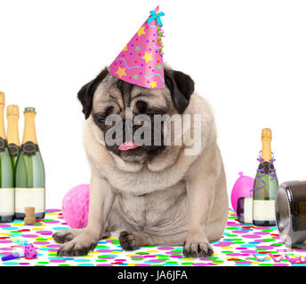 wasted pug puppy dog wearing party hat, sitting down on confetti, fed up and drunk on champagne, tired of partying, - Stock Image