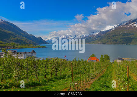 Hardangerfjord in Norway - Stock Image