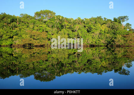 The Amazon Rainforest with Blue Sky and Mirror Reflections in the Water. Amazonas, Brazil - Stock Image