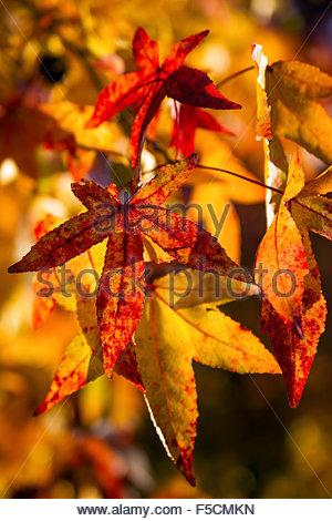 Autumn - Fall - Stock Image
