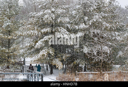 People admiring snow on evergreen trees - Stock Image
