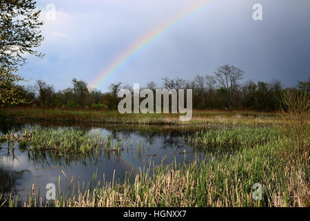 Rainbow over marsh Ohio - Stock Image
