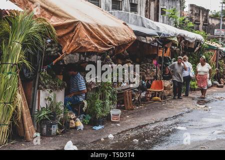 "Street vendor stalls of medicinal herbs ""yuyos' improvised on the sidewalks around Mercado (Market) 4, traditional market in Asuncion, Paraguay - Stock Image"