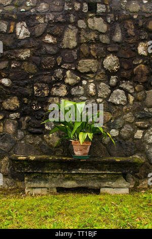 A plant in a terracotta pot on a stone bench against an historic stone wall in north east Italy - Stock Image