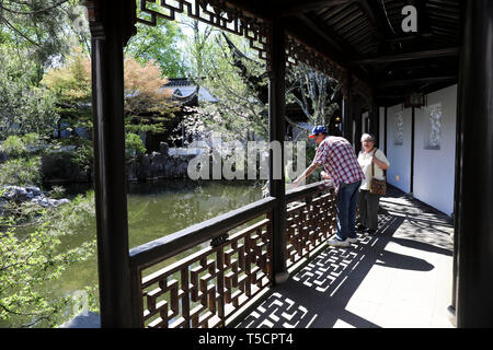 (190423) -- NEW YORK, April 23, 2019 (Xinhua) -- Visitors enjoy the spring scenery in the Chinese Scholar's Garden on Staten Island, New York, the United States, April 23, 2019. (Xinhua/Wang Ying) - Stock Image