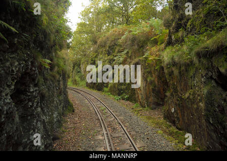 The cutting near the station at Devil's Bridge on the Vale of Rheidol Railway - Stock Image