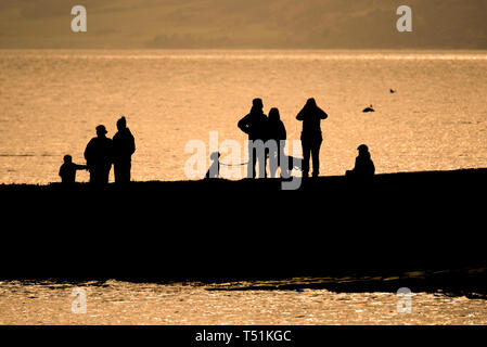 Looking for dolphins, Chanonry Point, Rosemarkie, Scotland. - Stock Image