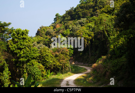 Jungle road road in tropical jungle forest Phuket Thailand - Stock Image