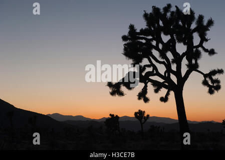 USA, California, Joshua Tree National Park at twilight - Stock Image