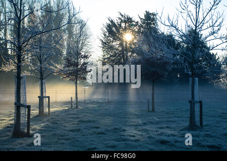 Sunrise over a Field Covered in Frost - Stock Image