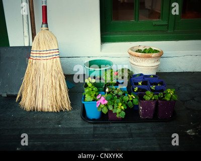 Broom and flower pots - Stock Image