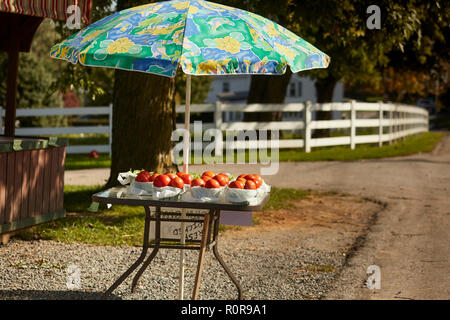 A roadside farm stand selling tomatoes, Pennsylvania Dutch Country, Lancaster, PA, USA - Stock Image