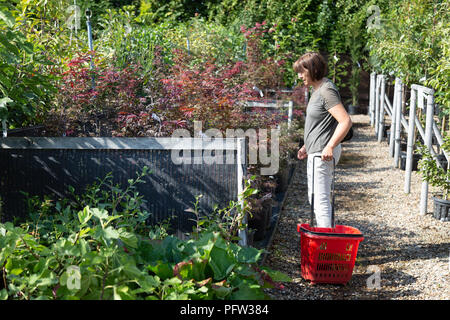 A model released woman shopping for plants at a garden centre, Cambridgeshire England UK - Stock Image