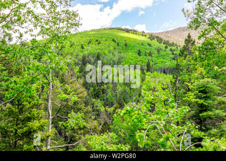 Santa Fe National Forest Sangre de Cristo mountains with green aspen trees in spring or summer and peak - Stock Image