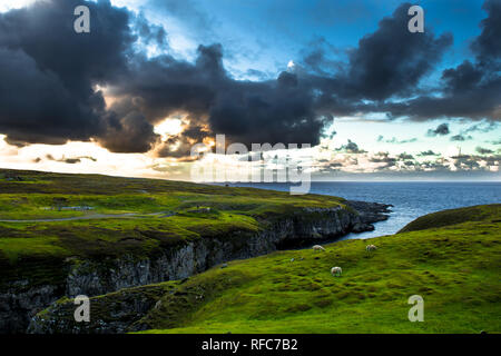 Canyon To Smoo Cave With Flock Of Sheep At The Twilight Atlantic Coast Near Durness In Scotland - Stock Image