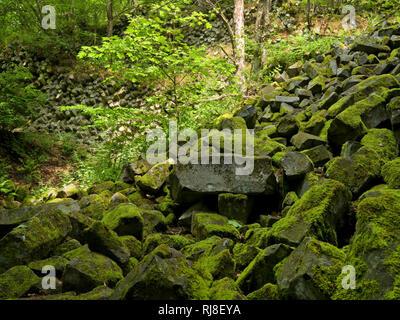 Deutschland, Bayern, Naturpark Bayrische Rhön, UNESCO-Biosphärenreservat, Basaltprismenwand am Gangolfsberg, Naturschutzgebiet Lange Rhön - Stock Image