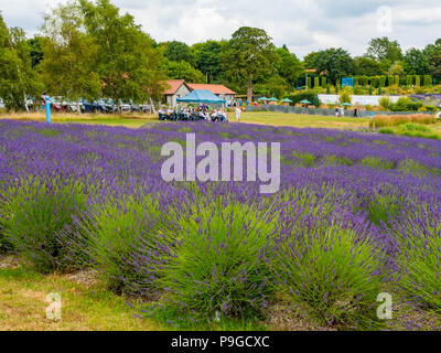 Café and shop at Yorkshire Lavender Terrington York UK with a visiting group of people having a presentation - Stock Image