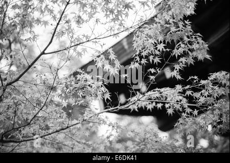 Leaves against a roof in Kyoto - Stock Image