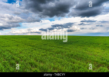 Green meadow field under blue sky with clouds - Stock Image