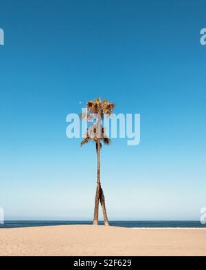 Palm tress on the beach. Dockweiler state beach, El Segundo California USA. - Stock Image