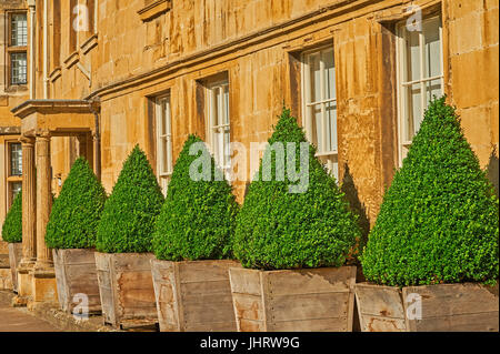 Repeating patterns of windows and conical shaped bushes. - Stock Image