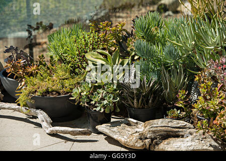 Potted plants in domestic garden - Stock Image