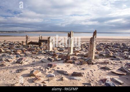 Wooden groins on the shore at Braunton Burrows Braunton Devon Uk - Stock Image