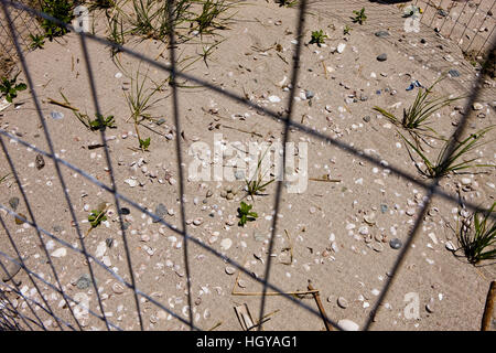 Piping plover nest, Charadrius melodus, as seen through the wire of an exclosure, on Long Beach in Stratford, Connecticut. - Stock Image