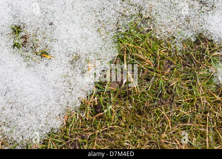 Snow melting on a lawn. - Stock Image