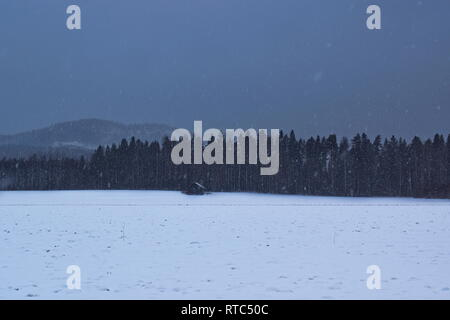 A little hut is standing at the edge of a forest at dusk as snow is falling from the darkening sky. - Stock Image