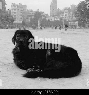 Old black dog - Stock Image