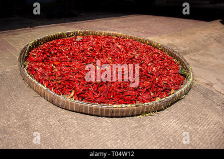 A basket of freshly picked red chillies left out to sun dry. - Stock Image