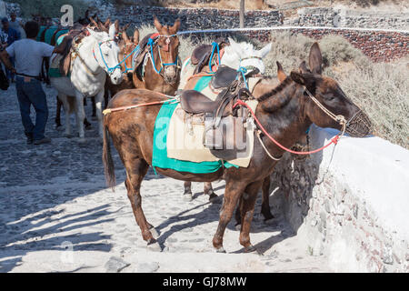 Santorini Donkeys Greece - Stock Image
