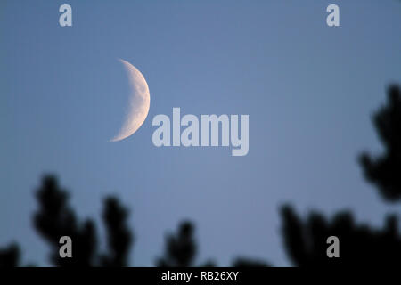 The moon in twilight - Stock Image